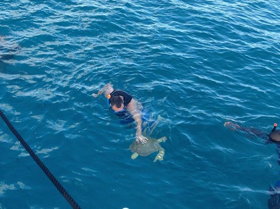 Cool Runnings Catamaran Cruises: Sea turtles