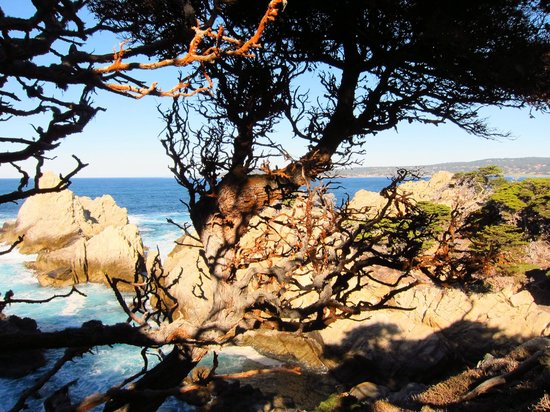 Point Lobos State Reserve : Cypress Grove trail