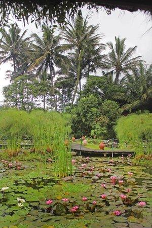 Kampung Sumber Alam: View