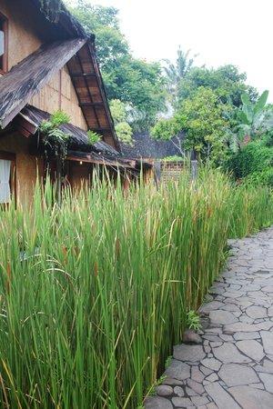 Kampung Sumber Alam: Junior suite, back view