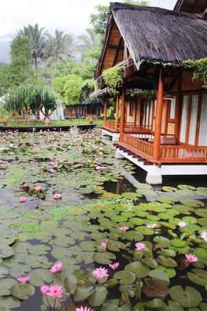 Kampung Sumber Alam: Resort grounds