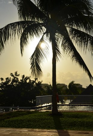 The Westin Resort & Spa Cancun: palm tree overlooking the sunset pool at the westin