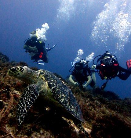 scuba diving equipment ebay