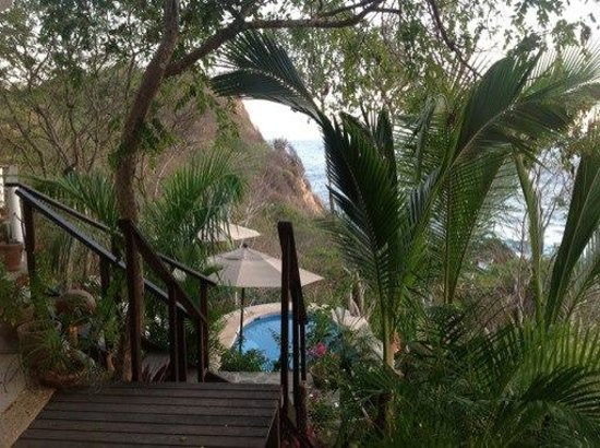 Casa Sol Zipolite: view of the pool through lush gardens