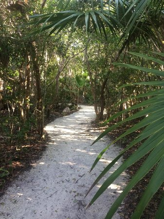 Windley Key Fossil Reef Geological State Park: Nature Trail