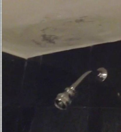 Grand Oasis Palm: Black Mold - seen in many places in the hotel