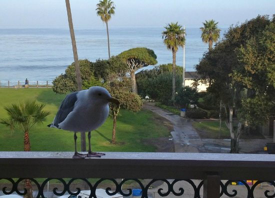 La Jolla Cove Hotel & Suites: view from our patio window