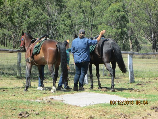 Cherrabah Resort : Well looked after horses