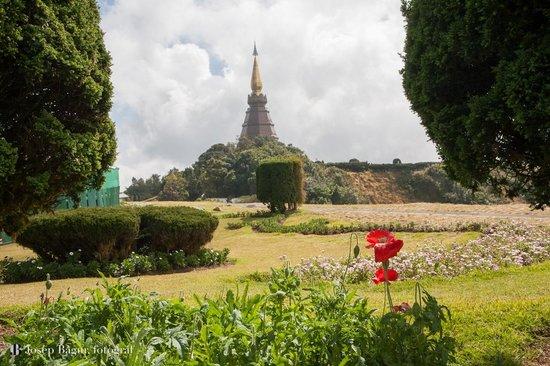 เมืองเชียงใหม่, ไทย: Flower and Pagoda Doi Inthanon