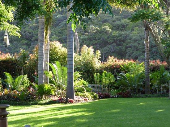 Pawhaoa Bay Lodge: More garden