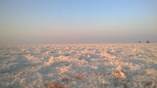 Great Rann of Kutch: SALT ALL AROUND