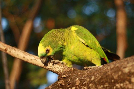 Fihalhohi Island Resort: Parrot near watersports