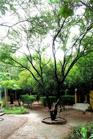 Mokolodi Backpackers: Greenery that expresses an earthly feel to the place.