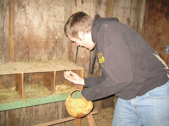 Kootenai Angler Guest Cabins : Chickens!