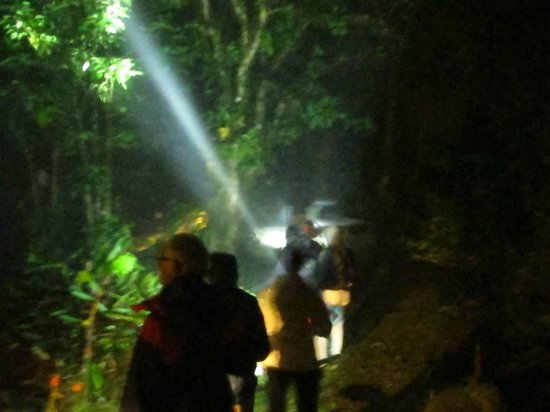 Villa Blanca Cloud Forest Hotel and Nature Reserve: Guided night tour in cloud forest (reserve guide at reception)