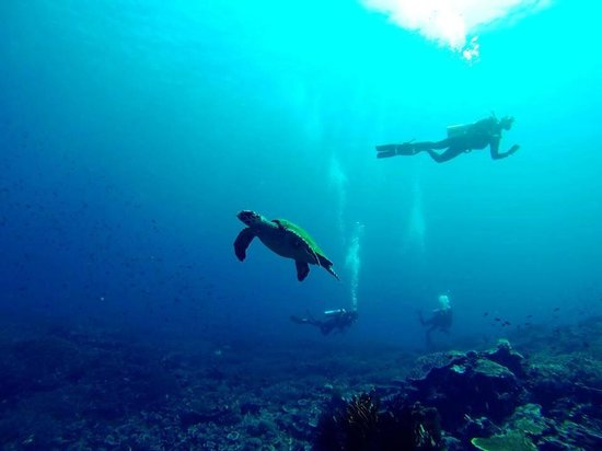 Divine Diving : Shot with Go Pro