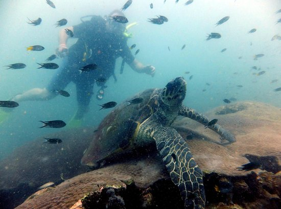 Pattaya Dive Centre: Turtle at 30M WOW AMAZING