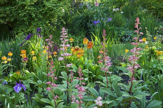 hidden valley gardens bog garden - Bog Garden