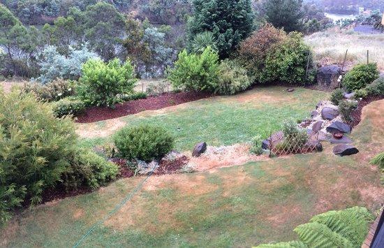 Launceston Bed and Breakfast Retreat: Wild life feeding area for wallabies, bandicoots and possums at dusk aka the  backyard overlooki