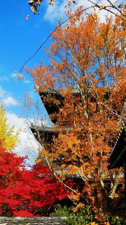 Shinnyodo Temple: 三重塔紅葉