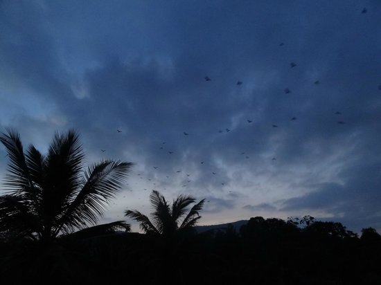 ‪‪Suresh Green View Homestay‬: Fascinating with all the bats flying over the hotel in the evening‬