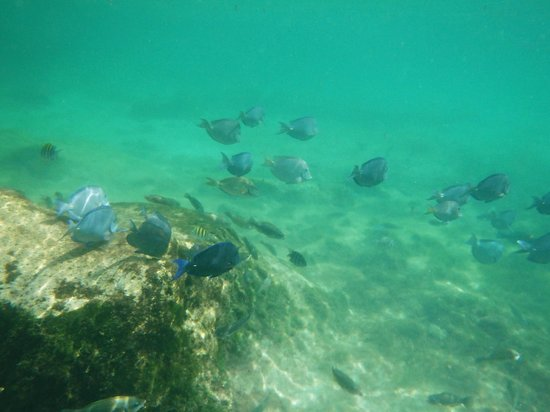Yal-ku Lagoon: School of Blue Tang