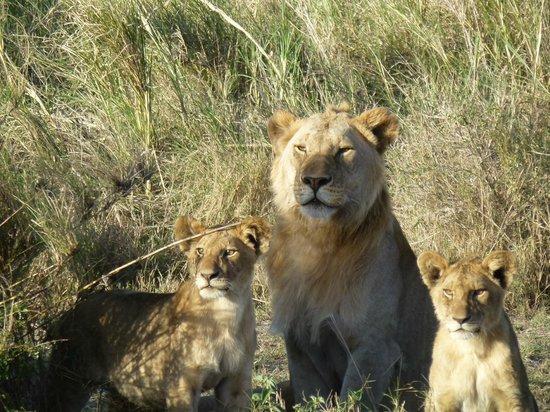 Serengeti Serena Safari Lodge: welcome party