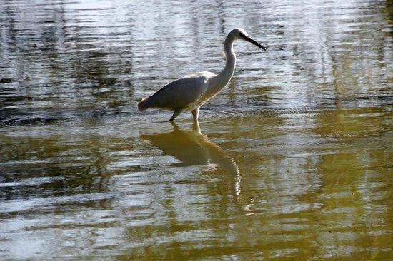 Thol Lake Bird Sanctuary: Dharmen