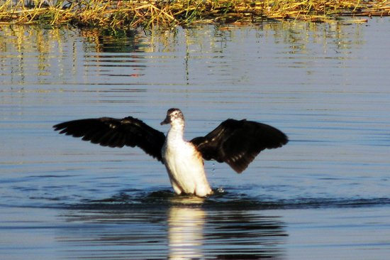 Thol Bird Sanctuary : Dharmen
