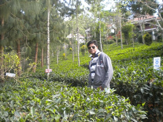 Birds Valley Resorts Munnar: tea garden in resort
