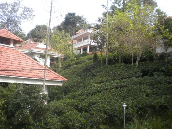 Birds Valley Resorts Munnar: View from reception area