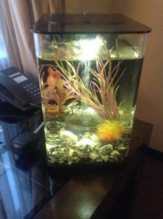 Maximilian Hotel: My little goldfish for a few days