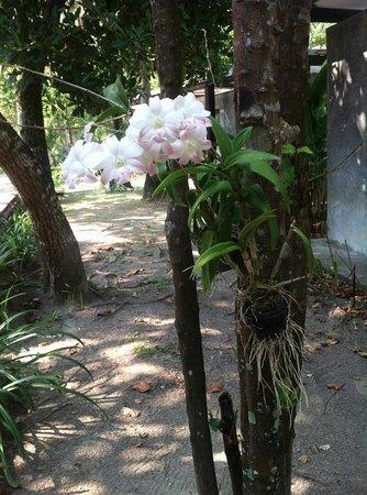 Costa Lanta: Beautiful garden