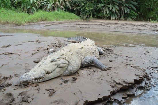 Crocodile Man Tour: The biggest croc on the river