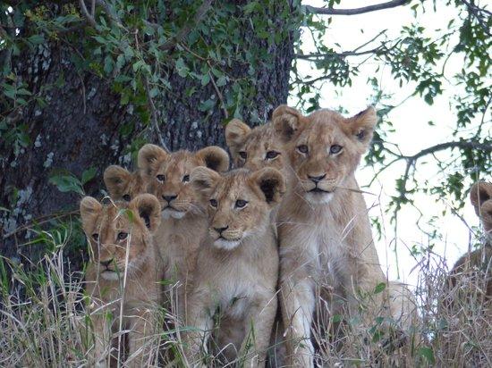 Nkorho Bush Lodge : Cachorros esperado a las madres
