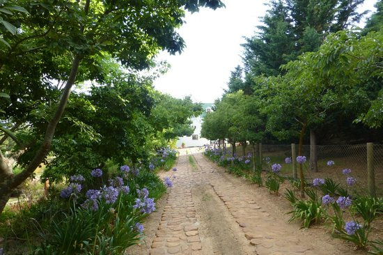 Peace Valley Guesthouse: The garden and driveway