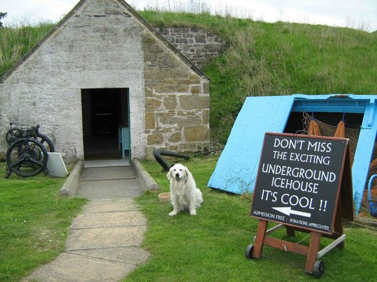 Findhorn, UK: heritage dog Rosie welcomes visitors to the Icehouse