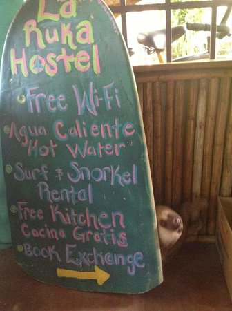 La Ruka Hostel: sloth in reception