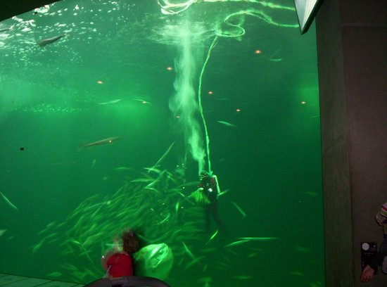 Nordsoen Oceanarium: oceanarium
