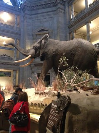 National Museum of Natural History: Elephant