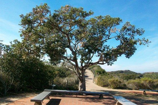 Cabrillo National Monument : Beautiful tree