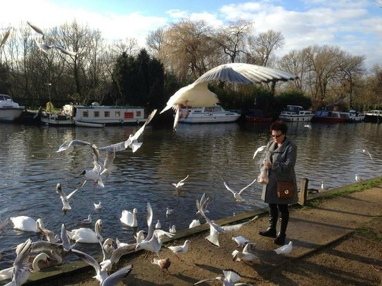 Innkeeper's Lodge Norwich: Feeding the birds 5 minute walk from hotel