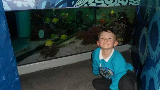 Sea Life Brighton: Connor loved his birthday surprise. :-)