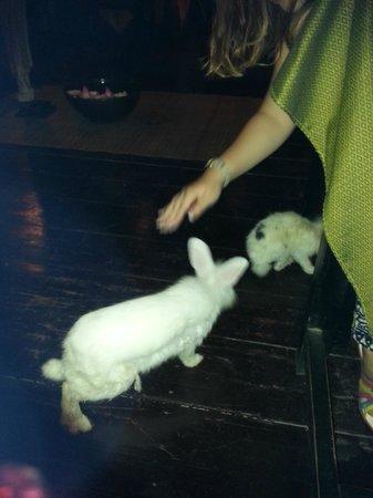 Petit Villa Boutique & Spa: Rabbits asking for food :)