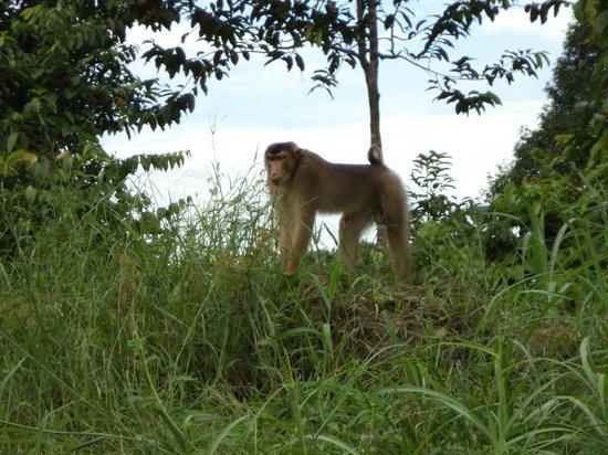 Tabin Wildlife Resort: avvistamenti lungo la strada