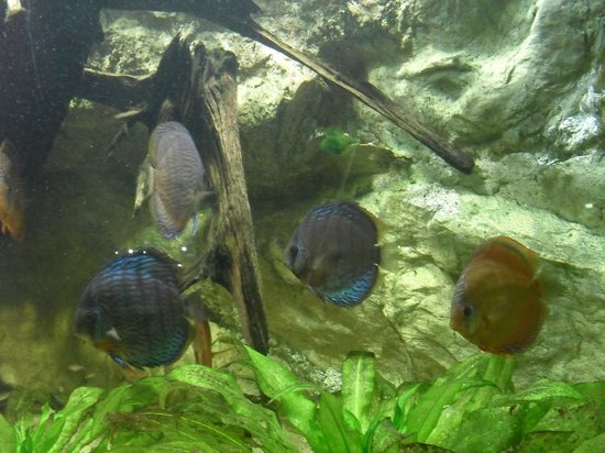 Pesci tropicali picture of aquarium tropical de la porte doree paris tripadvisor - Aquarium tropical de la porte doree ...