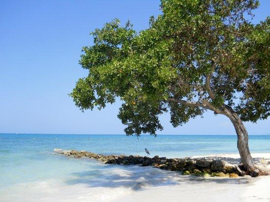 Decameron Isla Palma: Hermoso!