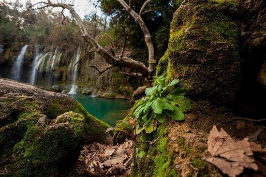Kursunlu Waterfalls : img