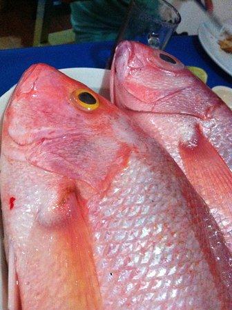 La Perlita: Pesca del día !!