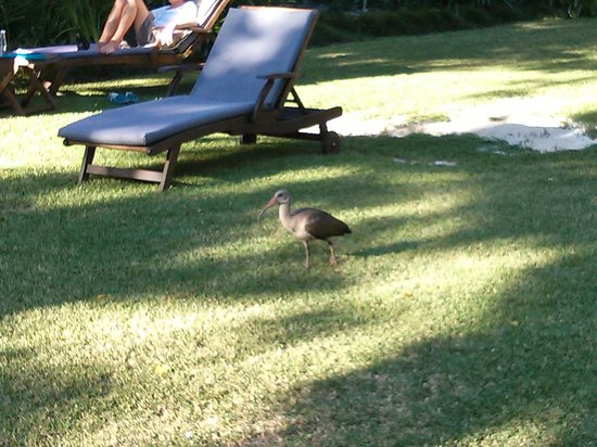 Summerwood Guest House: Bird in the garden